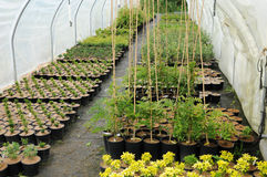 A plant nursery in Brittany Royalty Free Stock Image