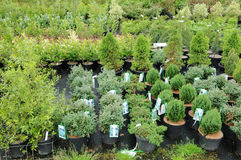 A plant nursery in Brittany Royalty Free Stock Photography