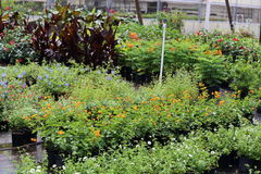Plant Nursery. A close up view of a plant nursery showing different types or perennials and annuals Stock Photos