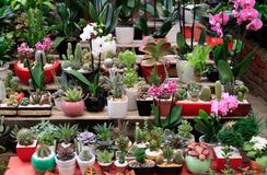 Plant nursery in Coyoacan Mexico. royalty free stock image
