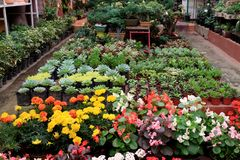 Plant nursery in Coyoacan Mexico. stock photography