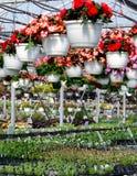 Plant nursery Stock Images