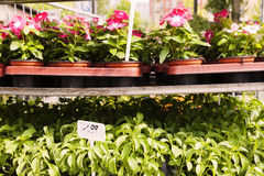 Plant Nursery Flower Planters at Mauerpark Flea Market Berlin Ge Stock Photos