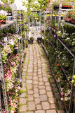 Plant Nursery Flower Planters at Mauerpark Flea Market Berlin Ge Stock Photo