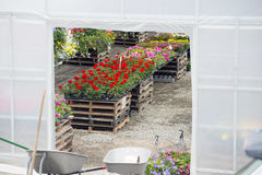 Plant Nursery. A glimpse inside a  reveals a colourful array of flowers Stock Photography