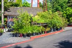 Plant nursery Royalty Free Stock Photo