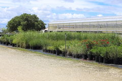 Plant Nursery. A Plant nursery that has different species of plants lined up in rows Royalty Free Stock Images