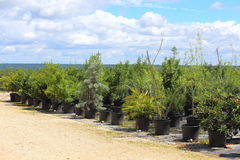 Plant Nursery Stock Photo