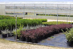 Plant Nursery. A Plant nursery that has different species of plants lined up in rows Stock Photography