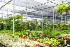 Plant Nursery Royalty Free Stock Images
