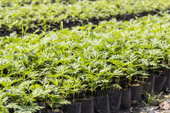 Plant nursery in a seeding bag Royalty Free Stock Image