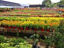 Plant nursery Stock Image