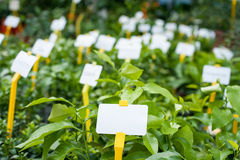 Plant nursery view with white label Royalty Free Stock Photos