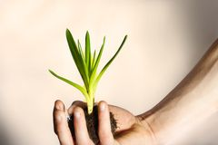 Plant Nurture- New Growth. A shot to illustrate the theme of new growth and life royalty free stock photography