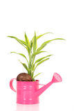 Plant in nut Stock Images