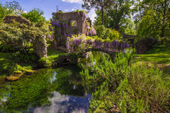 Plant Of Wisteria On Historic Bridge In The Ninfa Garden Royalty Free Stock Image