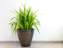 Plant in office building Royalty Free Stock Image