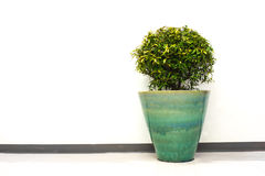 Plant in office building Royalty Free Stock Images