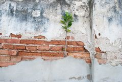 Plant on the old brick. Small plant growing on old brick Royalty Free Stock Image