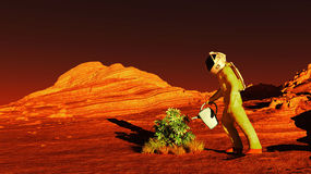 Free Plant On Mars Stock Images - 71505454