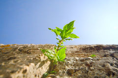 Free Plant On The Wall Stock Image - 19585801