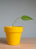 Plant with one leaf Stock Image