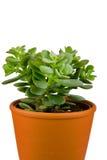 Plant in orange pot Stock Image
