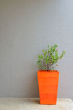 Plant in orange pot with a gray mortar wall background Stock Images