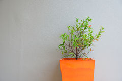 Plant in orange pot with a gray mortar wall background Stock Photo