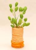 Plant in orange vase Royalty Free Stock Photo