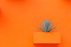 Plant on an orange wall Royalty Free Stock Image
