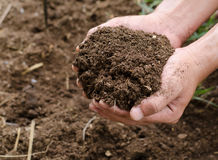 Plant organic compost fertilizer on farmer hand royalty free stock image