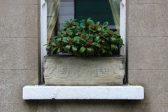 Plant in an Ornate Box in Window Royalty Free Stock Photos