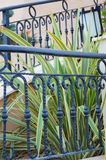 Plant out of fence Royalty Free Stock Photography
