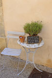 Plant on an outdoor table in Provence Stock Photo