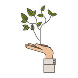 Plant over hand design. Plant over hand icon. Gardening nature green and home theme. Isolated design. Vector illustration Royalty Free Stock Photography