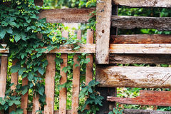 Plant over wood fence Royalty Free Stock Photo