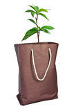 Plant with paper bag. On white background Royalty Free Stock Photography