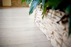Plant and parquet Royalty Free Stock Photo