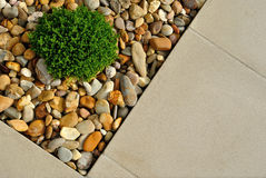 Plant, pebbles and paving texture Stock Images