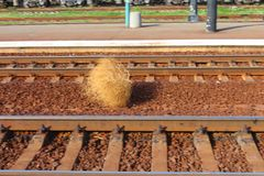 Plant perekoty field. Plant rolling  on the rails Royalty Free Stock Images