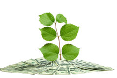 Plant in pile of money Royalty Free Stock Image