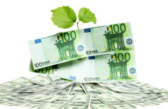 Plant in pile of money Royalty Free Stock Photos