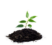 Plant and pile of soil Stock Photography