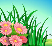 A plant with pink flowers Stock Images