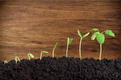 Plant. Dirt soil growth green sprout ground Royalty Free Stock Images