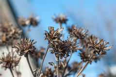 Plant. S and Flowers, dried flowers on the sky background Stock Photo