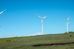 Plant platåområde med vindturbiner i bergen i norden av ön av madeiran Royaltyfria Foton