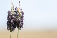 Plant portrait grass flowers Stock Photo