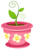 Plant in a pot Stock Images